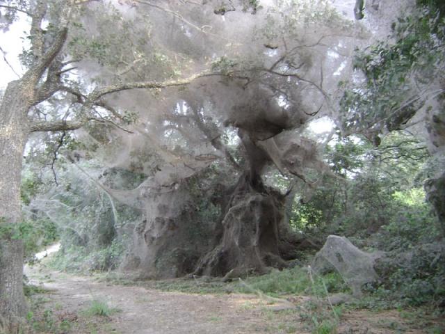 spider_webs_2--donna_garde